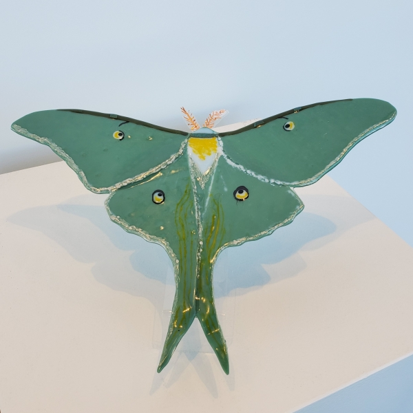 Luna Moth by Diana Chase